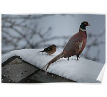 Pheasant in the snow Poster