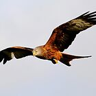 Red Kite by Peter Stone