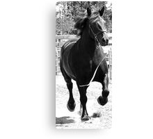 Running Loose Canvas Print