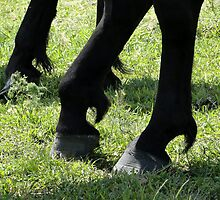 Posed Hooves by Al Bourassa