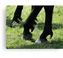 Posed Hooves Canvas Print