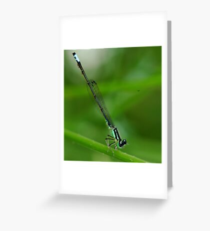 Handstand Greeting Card