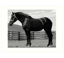 Black Beauty - Percheron Mare Art Print