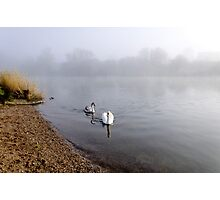 Mute Swan and Cygnet on the Misty River Photographic Print