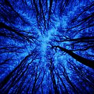 Icy canopy (dark) by Guy Carpenter