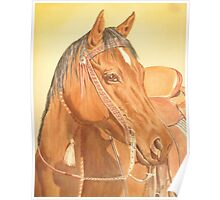 Bay Horse Poster