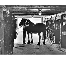 Undressing In The Barn Photographic Print