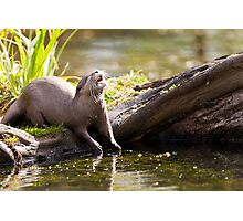 The Jolly Otter Photographic Print