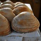 Line of shells  by Jeff Stroud