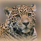 Young Jaguar by Sandy Keeton