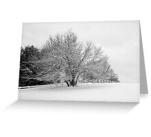 Snowcovered Tree Greeting Card