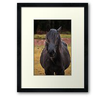 Another bad hair day Framed Print