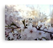 Lego Stormtrooper X Cherry Blossoms Canvas Print