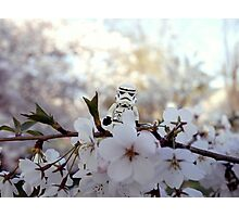 Lego Stormtrooper X Cherry Blossoms Photographic Print