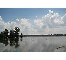 Song of the Bayou - Lake Martin, LA Photographic Print