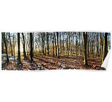 Winter Woodland at Sunset Poster