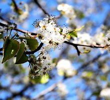 April Blossoms by Jennifer Rhoades