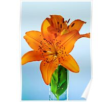 African Lily Poster
