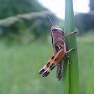 Locust by Annabella