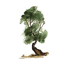 Little Tree 122 Photographic Print