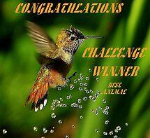 CHALLENGE WINNER by RoseMarie747