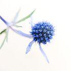 Blue Chic by Sarah-fiona Helme