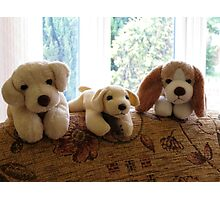 Cute K9 Toys Photographic Print