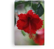 Red Hhybiscus Canvas Print