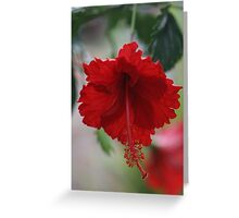 Red Hhybiscus Greeting Card