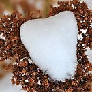 Snowy Valentine by MaryLynn