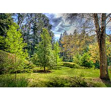 "Treescape - ""Wairoa"", Private Gardens, Stirling, Adelaide Hills Photographic Print"