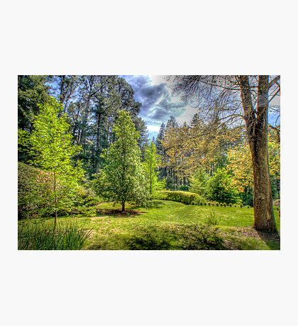 """Treescape - """"Wairoa"""", Private Gardens, Stirling, Adelaide Hills Photographic Print"""