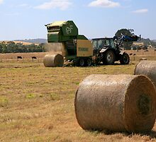 Harvesting at Yan Yean by Pauline Tims