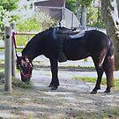 Pony by Adventures