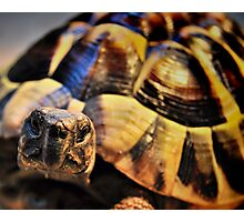 Tortoise Photographic Print