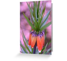Exotic Mystery Greeting Card