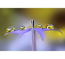 A row of daisies Photographic Print