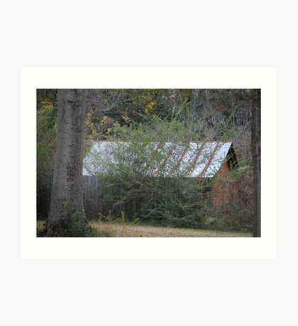 Old Shed Art Print