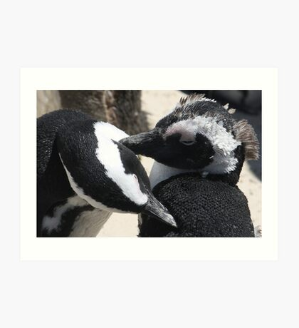 Hen Pecked -  African Penguins Cleaning Art Print