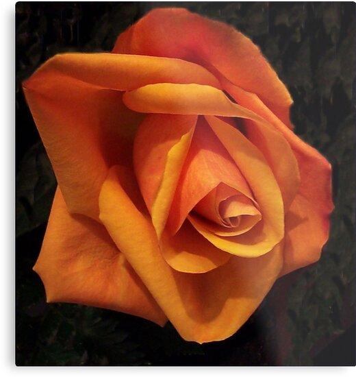 A Single Orange Rose by Ginny York