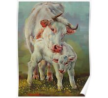Bonded-Cow And Calf Poster