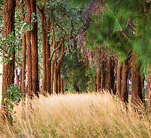 Parkes Forest NSW by Frank Moroni