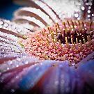 ...sparkl'd... by Geoffrey Dunn