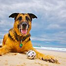 Pepper and the ball by { wetnosefotos.com  }