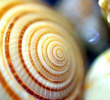 Shell by mfreeburn