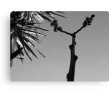 First Bud, Black & White Canvas Print