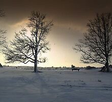 Sunshine and Snowy Trees by ienemien