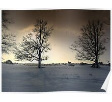 Sunshine and Snowy Trees Poster