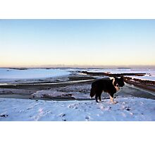 Arctic Indy Photographic Print