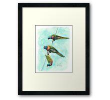 Rainbow Lorikeets on Wire Framed Print